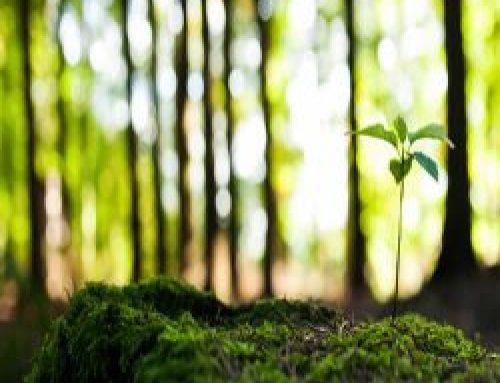 中華自然醫學體內環保家庭健康管理課程